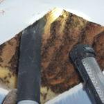 Honey Bees in Ceiling